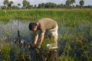 Sampling for macroinvertebrates in wetlands on a cattle ranch in Florida.